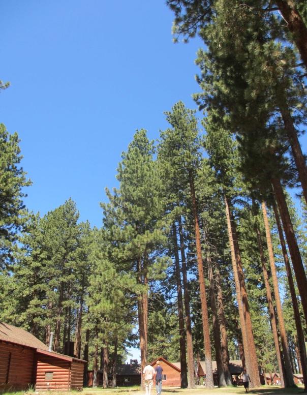 forest camp.jpg