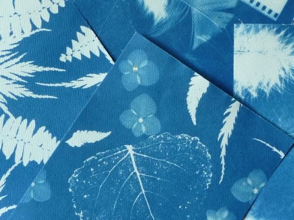 cyanotype leaves