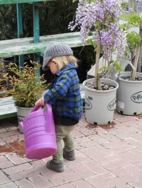 ezra watering